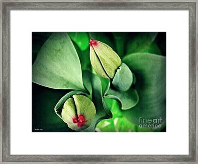 Potted Tulips Still Life   Framed Print by Sarah Loft