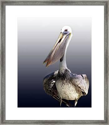 Pouches Framed Print by Skip Willits