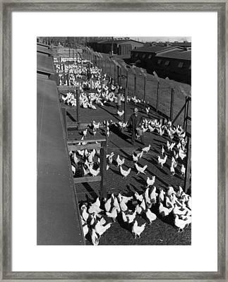 Poultry Farm, 1943 Framed Print by Granger