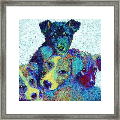 Pound Puppies Framed Print by Jane Schnetlage