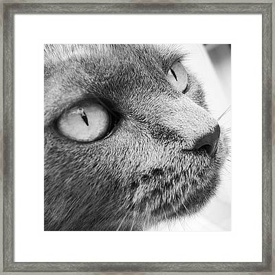Pout Framed Print by Cameron Bentley