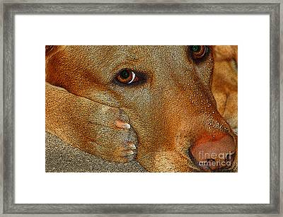 Pout Framed Print by Diane E Berry