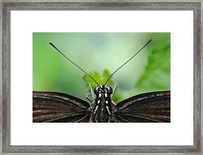 P.o.v. Framed Print by Dan Holm