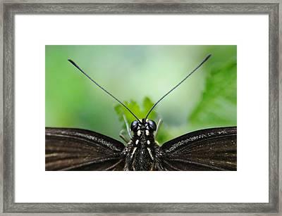 P.o.v. Framed Print