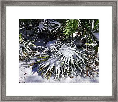 Powdered Palms Framed Print