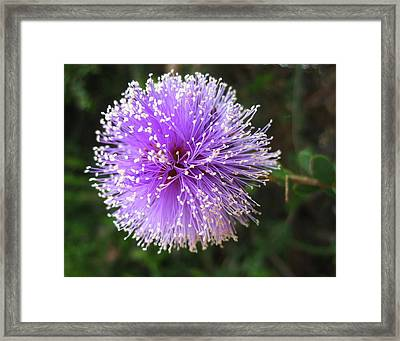 Framed Print featuring the photograph Purple Orb by Mary Ellen Frazee