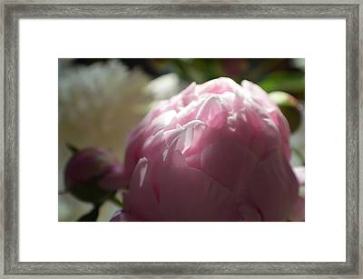 Powdery Feel Framed Print by Tina M Wenger
