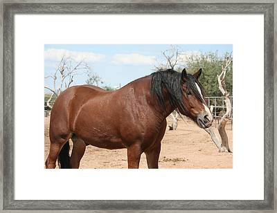 Power And Beauty Framed Print by Wendi Curtis