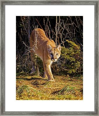 Power And Grace Framed Print by Jack Bell