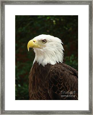 Power And Pride Framed Print by Jack Norton