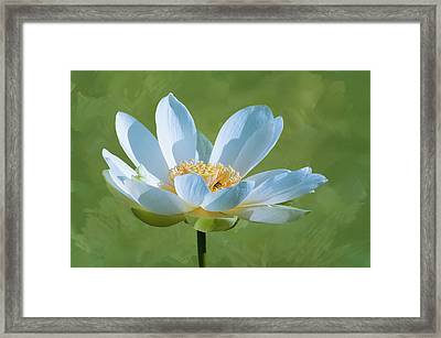 Framed Print featuring the photograph Power Of A Lotus by Carolyn Dalessandro