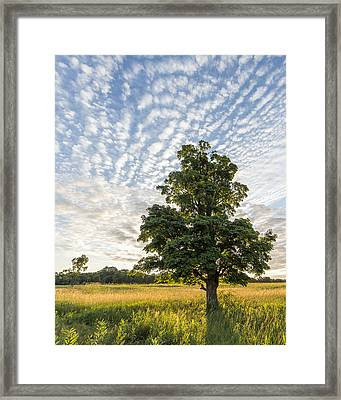 Power Of A Tree Framed Print by Everet Regal