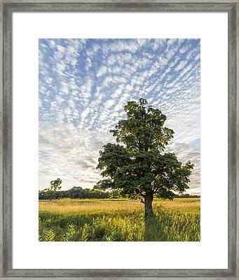 Power Of A Tree Framed Print