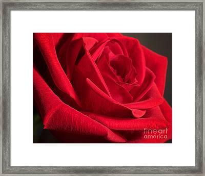 Power Of Love Framed Print by Anita Oakley