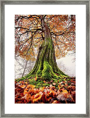 Power Of Roots Framed Print