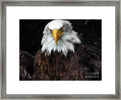Power Of The Eagle Framed Print