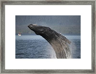 Powerful Framed Print by Bill Cubitt
