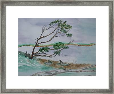 Powerful Winds Of Tierra Del Fuego Argentina  Framed Print