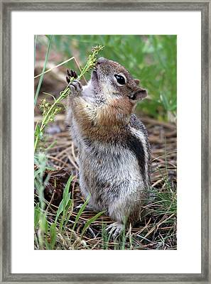 Practicing For A Singing Audition Framed Print