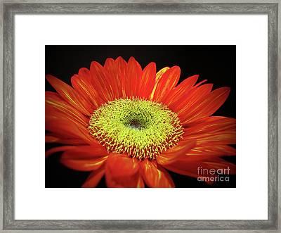 Prado Red Sunflower Framed Print