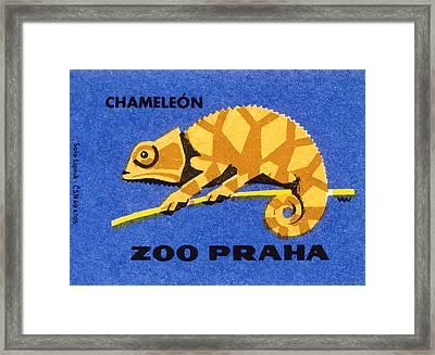 Prague Zoo Chameleon Matchbox Label Framed Print