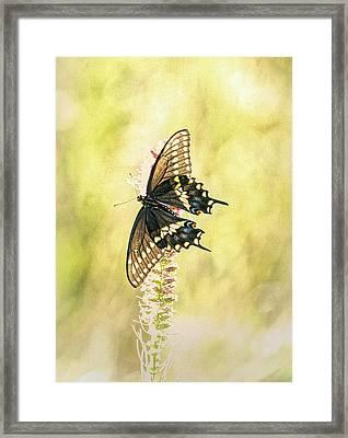 Prairie Butterfly 2 Framed Print