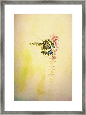 Prairie Butterfly 3 Framed Print