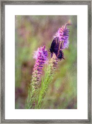 Prairie Butterfly Framed Print