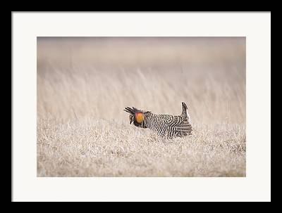 Buena Vista Grasslands Framed Prints
