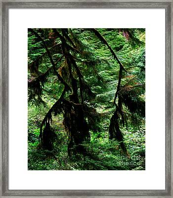 Prairie Creek Redwoods State Park 12 Framed Print
