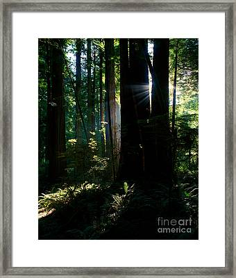 Prairie Creek Redwoods State Park 6 Framed Print