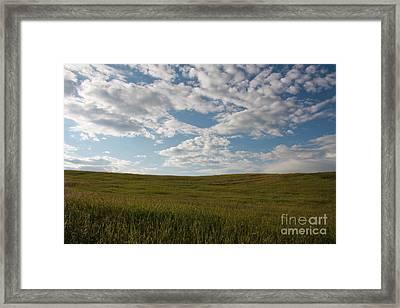 Framed Print featuring the photograph Prairie Field by Wilko Van de Kamp