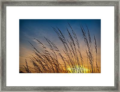 Prairie Grass Sunset Framed Print by Steve Gadomski