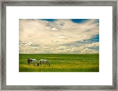 Prairie Horses Framed Print by Todd Klassy