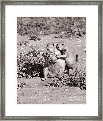 Prairie Love Framed Print