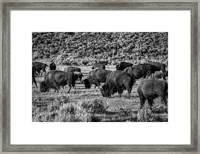 Prairie Memories Framed Print by TL  Mair