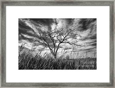 Prairie Monarch Framed Print by Bob Christopher