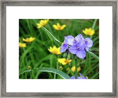 Prairie Spring Framed Print