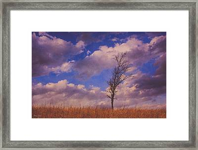Prairie Tree Survivor Framed Print by Anna Louise