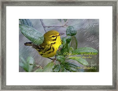 Prairie Warbler Framed Print by Anne Lindgren