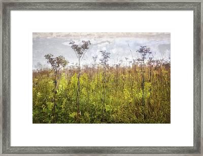 Prairie Wildflowers Of Retzer Nature Center  Framed Print by Jennifer Rondinelli Reilly - Fine Art Photography