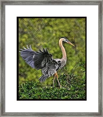 Framed Print featuring the photograph Prancing Heron by Shari Jardina