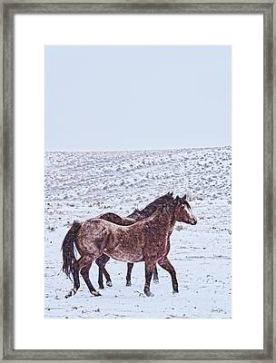 Prancing In The Snow Framed Print by Amanda Smith