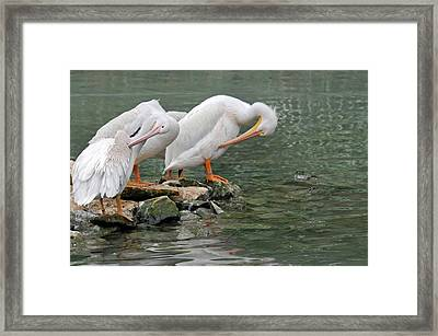 Prayer Of The Pelicans Framed Print by Teresa Blanton