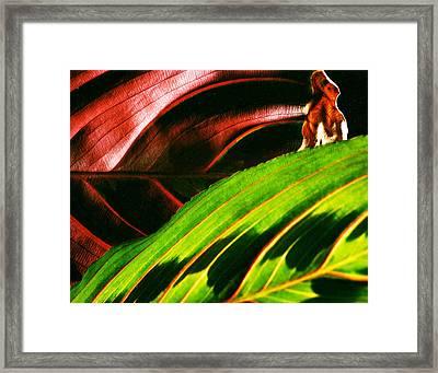 Prayer Plant Passing Framed Print