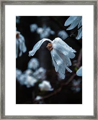 Prayers Of Flowers Framed Print