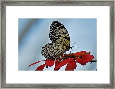 Praying Butterfly Framed Print by Teresa Blanton