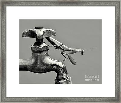 Praying Mantis Framed Print by Dean Harte
