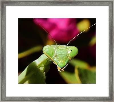 Praying Mantis Eyes Macro Framed Print by Linda Brody