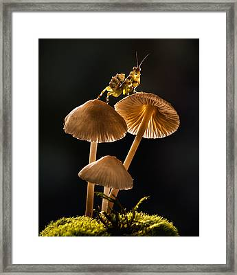 Praying Mantis On The Lookout Framed Print